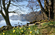 Daffodils at Wordsworth Point, Ullswater. Landscape photography by Martin Lawrence