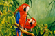 Sitting Pretty-Macaws painting by Toni hargreaves